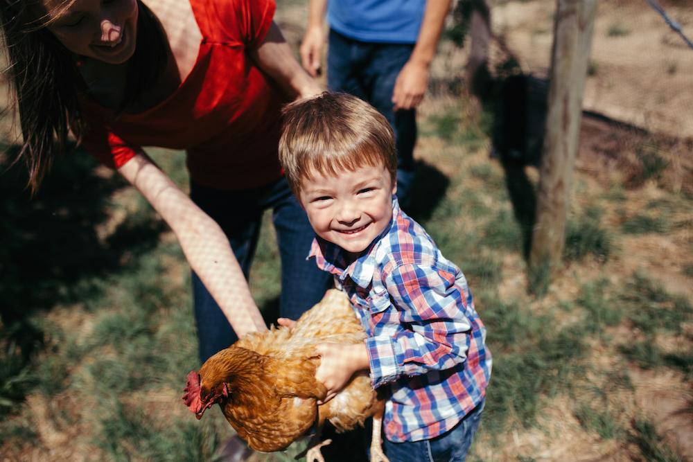 AOA-farmer-chicken